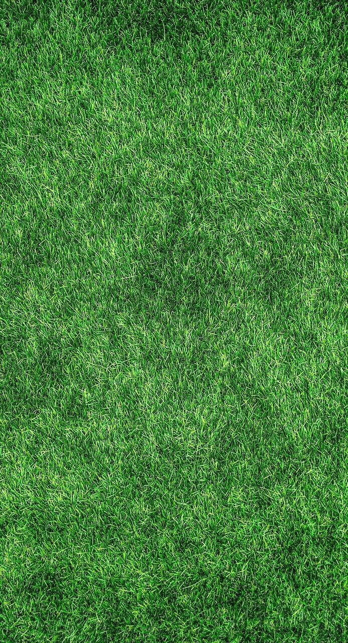 hierba, césped, jardín