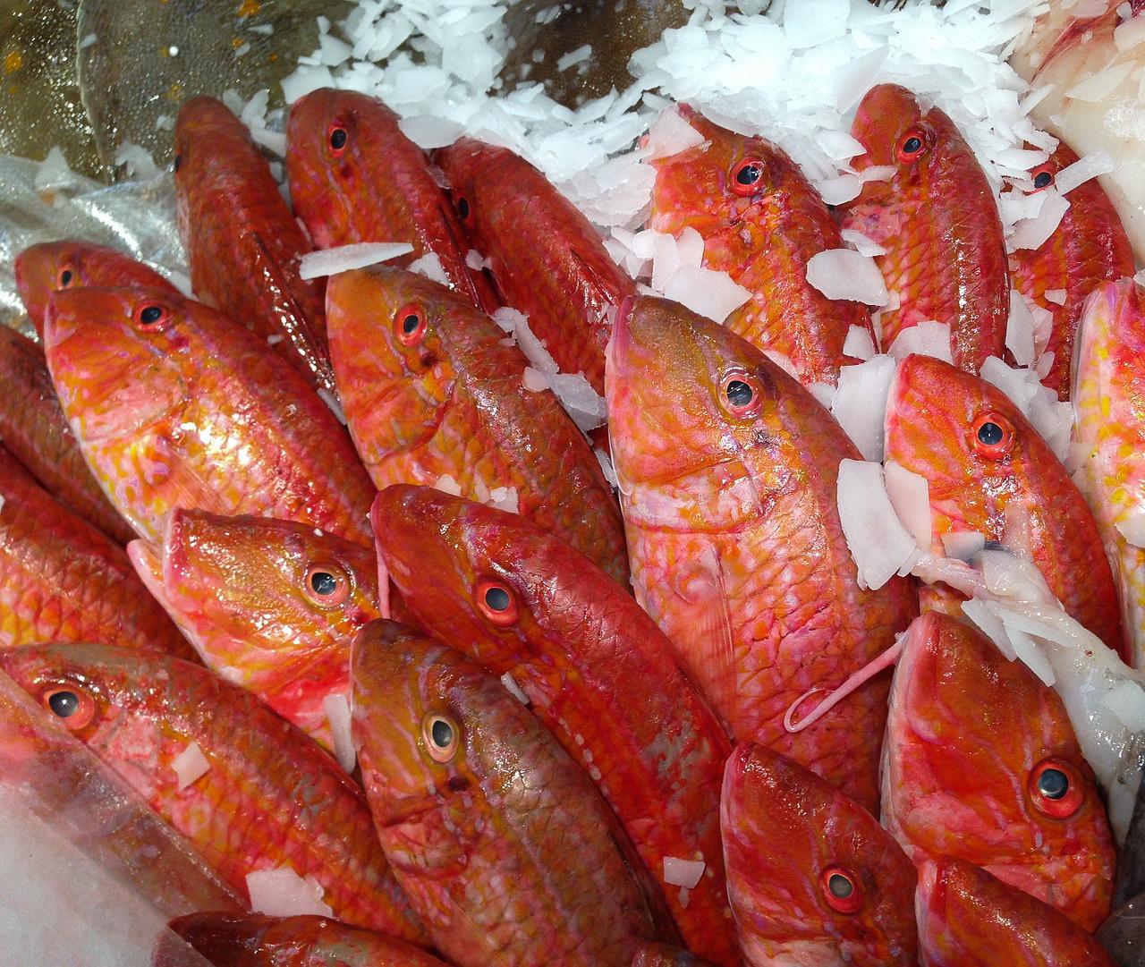 peces, salmonete, pescadería