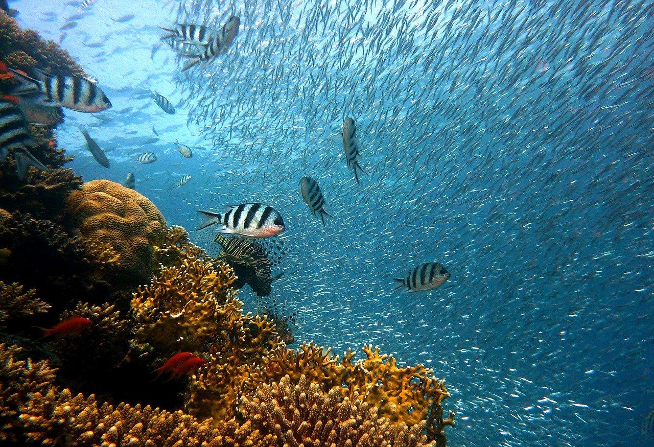 pez, submarino, corales