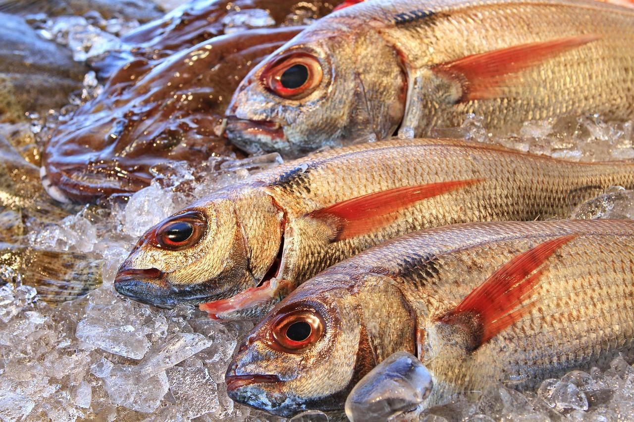 besugo, pescado, pesca