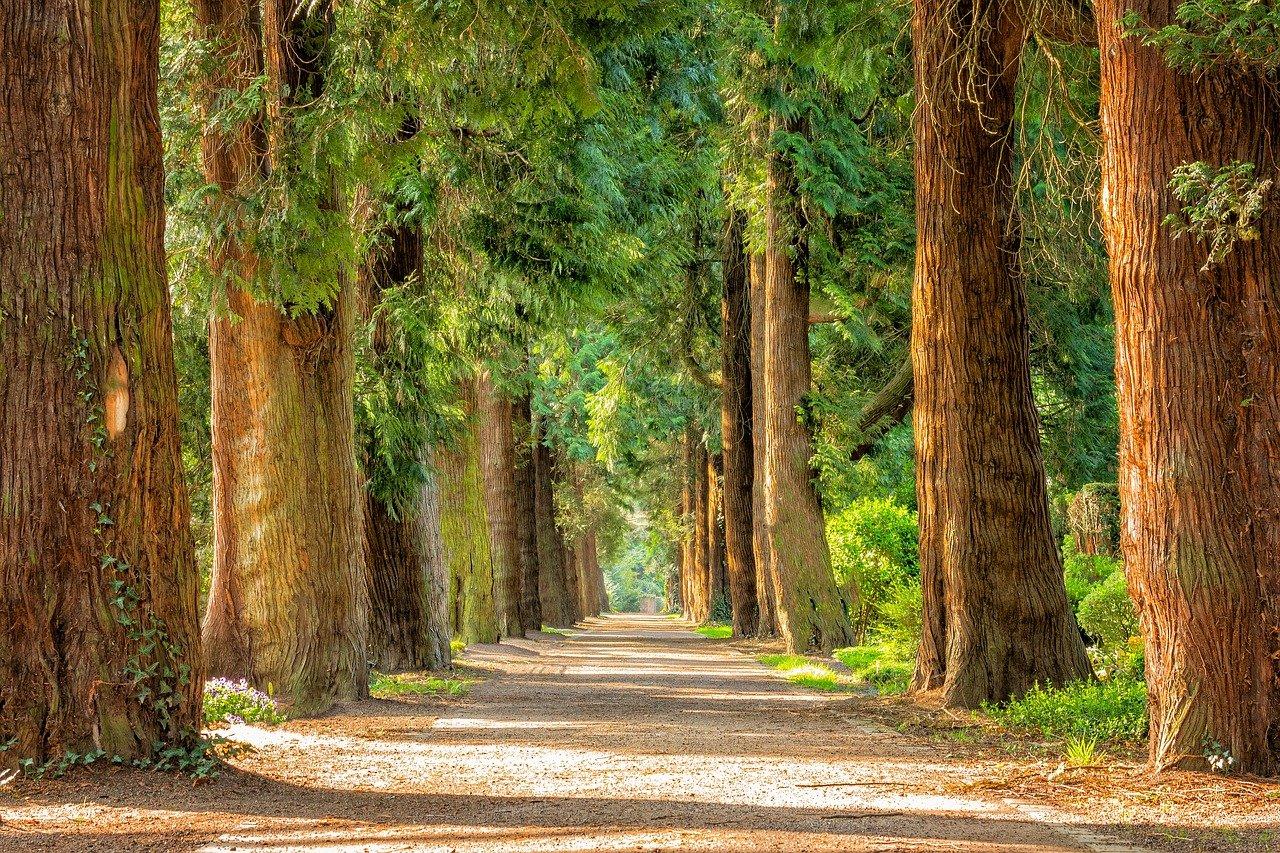 avenida, árboles, arbolado