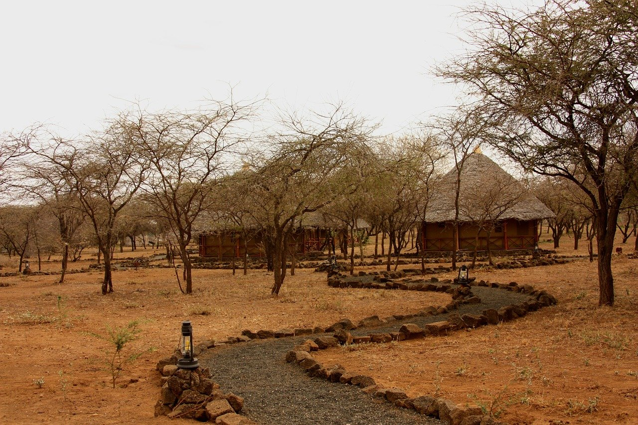 safari, acampar, tienda