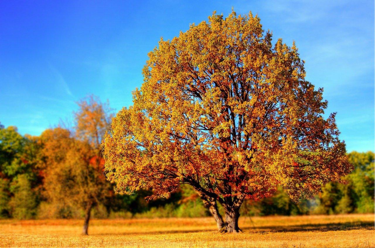 árbol, parque, otoño
