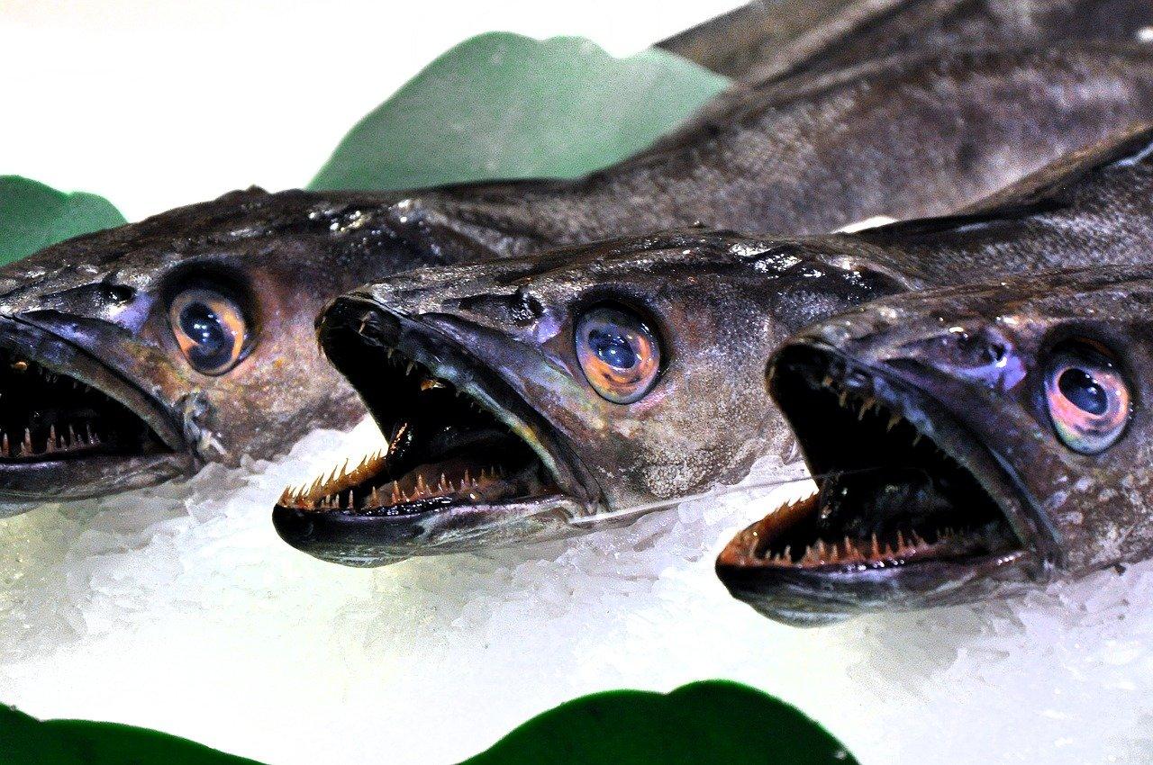 pez, mercado, comida