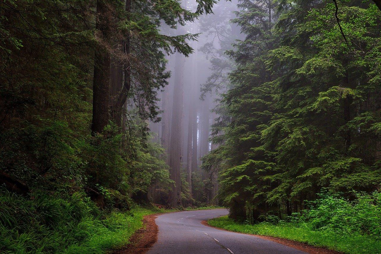 árboles, niebla, calle