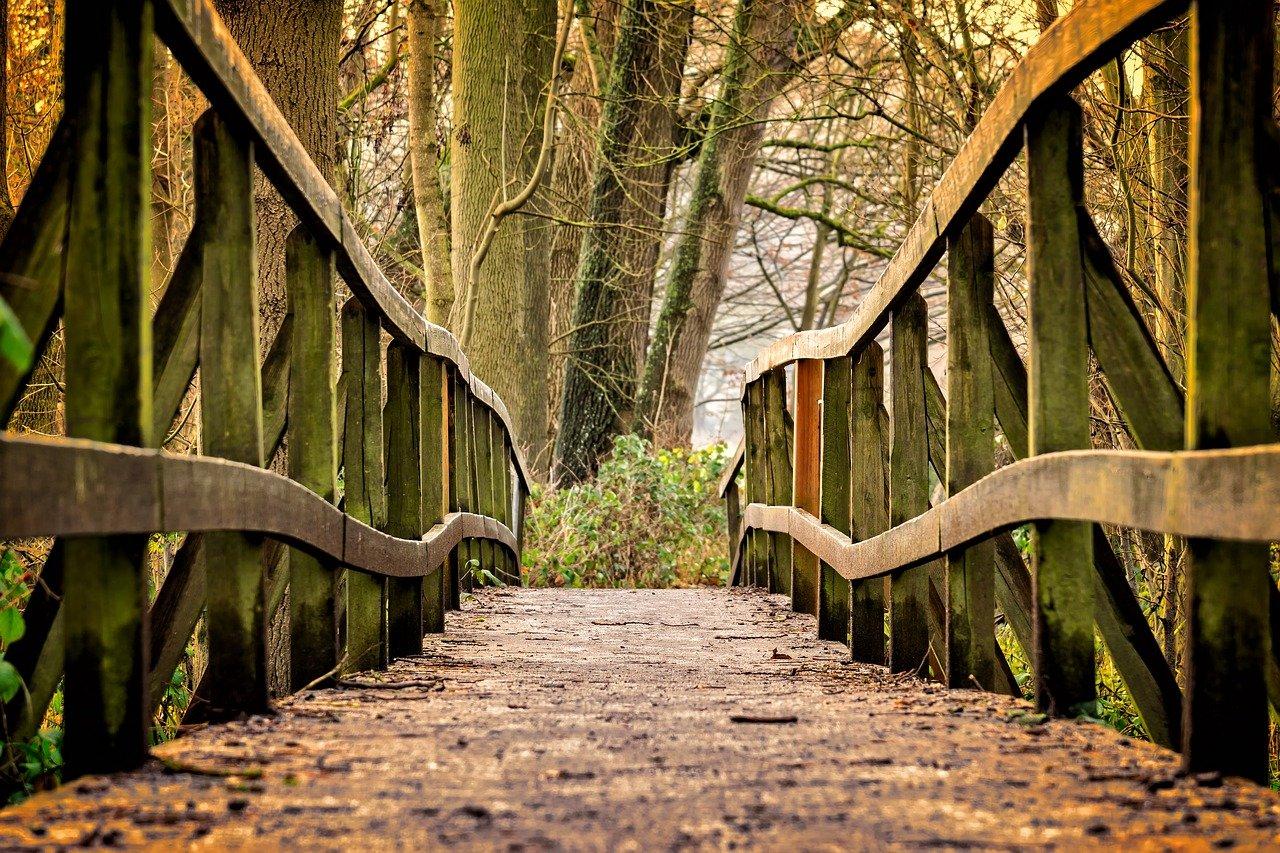puente, sendero, parque