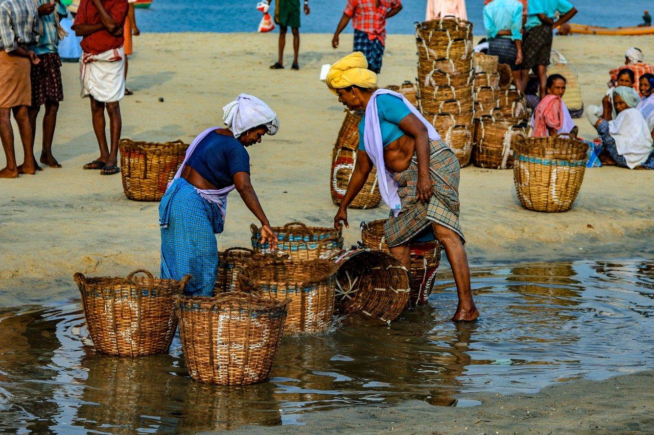 pescadería, mar, india