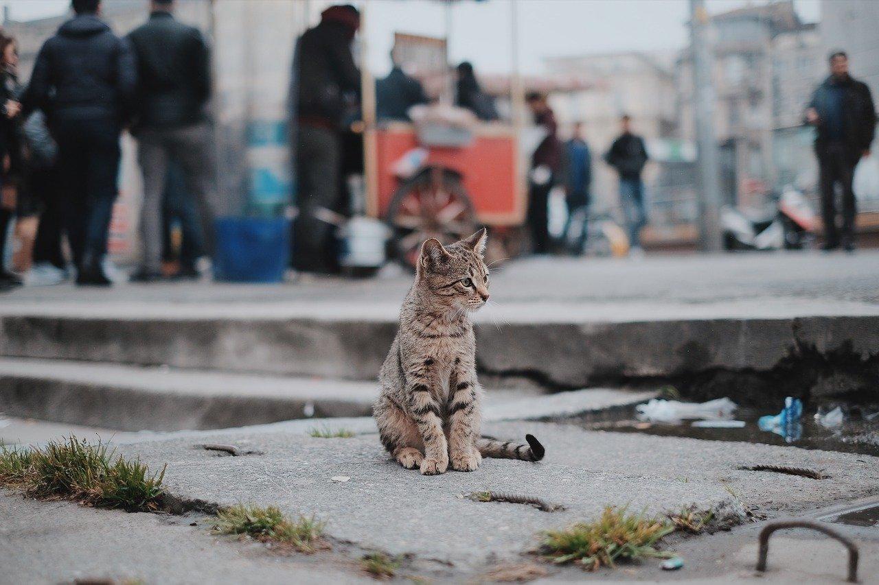 gato, mascota, animal
