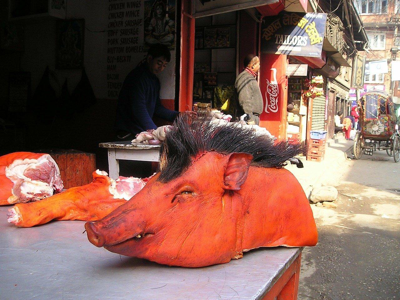 nepal, cerdo, cabeza