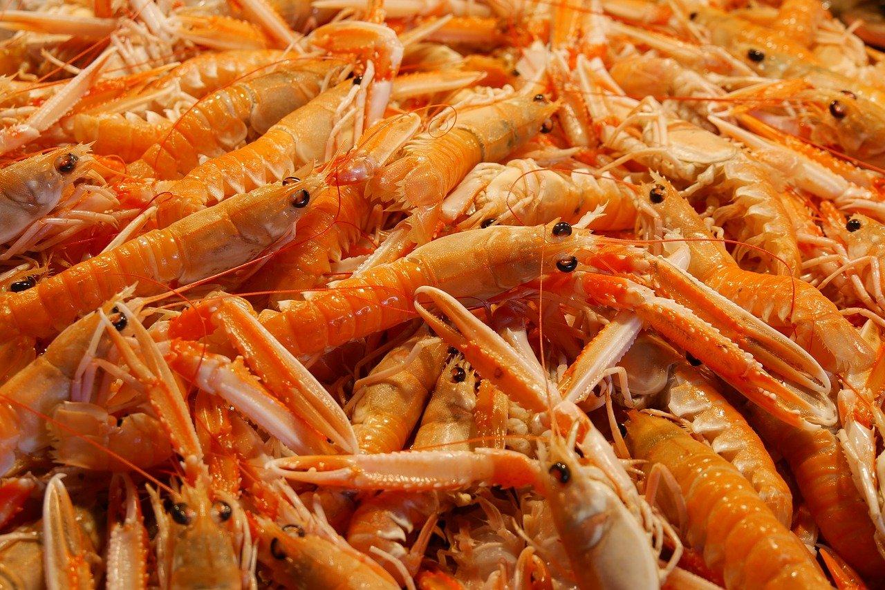 comida, mariscos, camarón