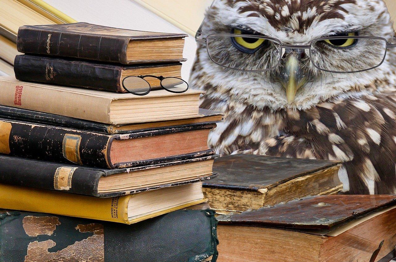 búho, libros, apilar