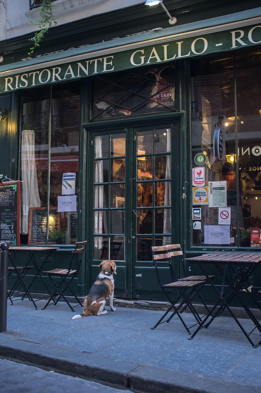 restaurante francés, cervecería, parís