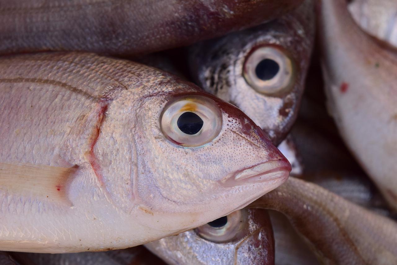 pez, fresco, pescadería