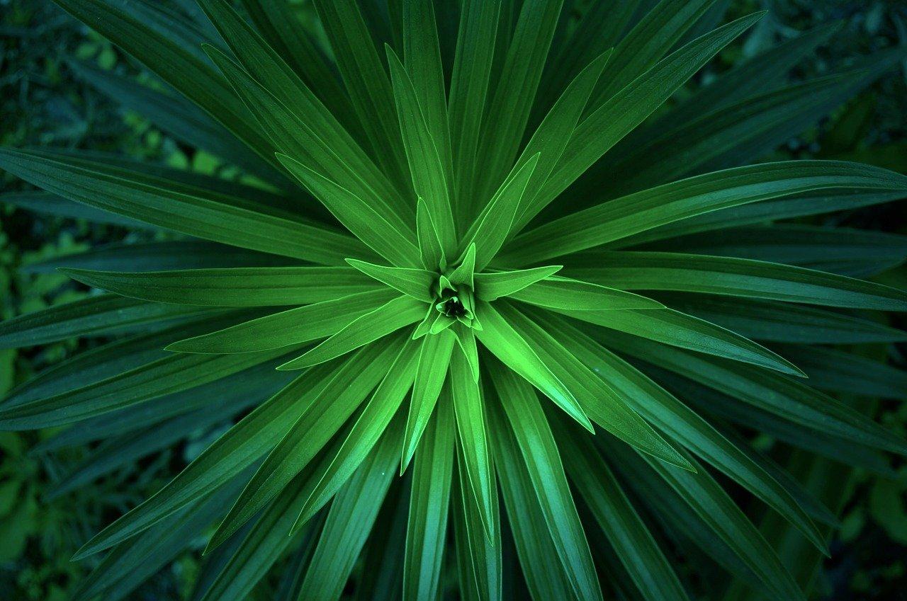 verde, planta, picos