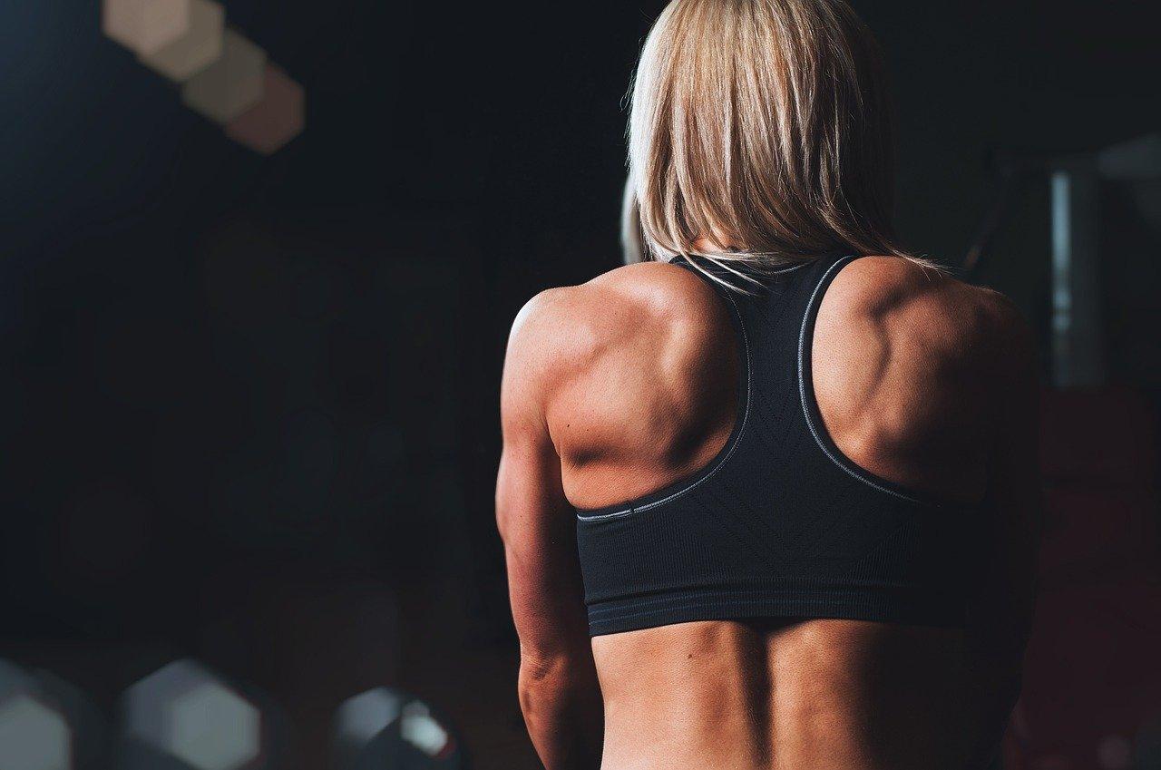 formación, músculos, espalda